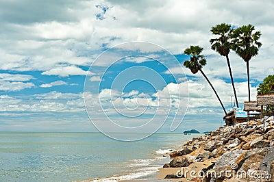 Palm trees beside the beach