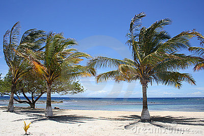 Palm Trees on a Beach