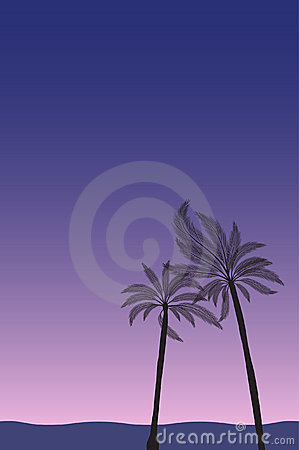 Palm trees by the beach