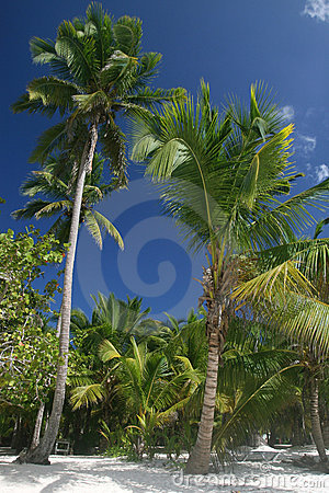 Palm Trees on Beach