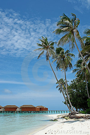 Palm trees on beach of island
