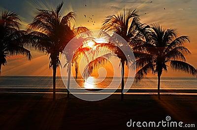 Palm Trees On Beach At Sun Set Free Public Domain Cc0 Image
