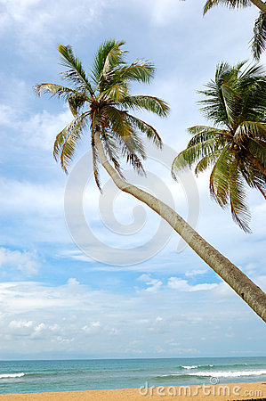 Palm trees on the beach and turquoise water of Indian Ocean