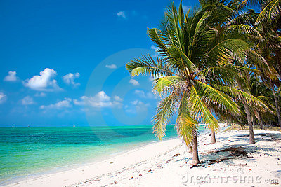 Palm trees on beach with turquoise waters