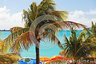Palm Trees and Beach Umbrellas