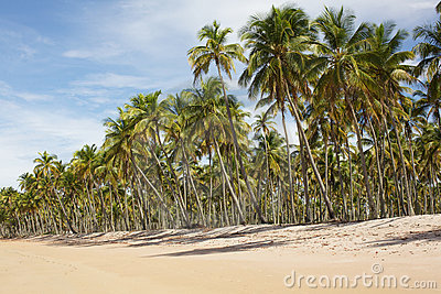 Palm trees on the beach, vacation landscape