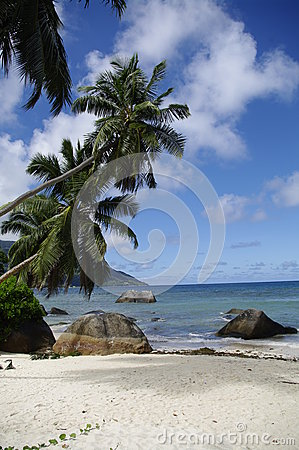 Palm trees at Beau Vallon beach, Seychelles