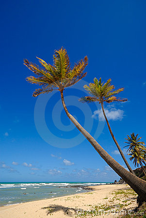 Palm trees and a beautiful beach
