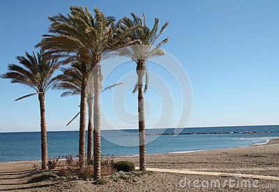 Palm trees on Benalmadena beach
