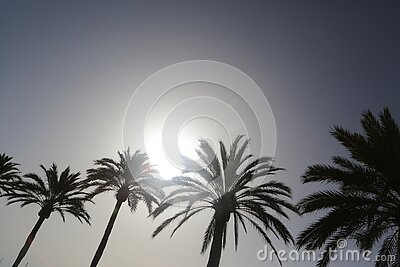 Palm Trees In Black And White Free Public Domain Cc0 Image