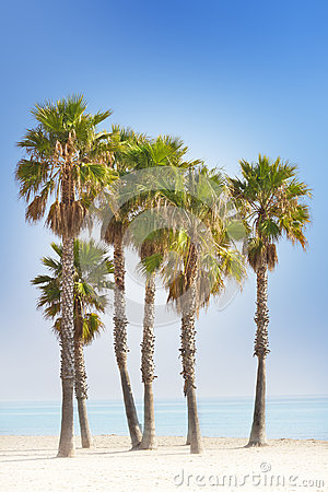 Palm trees and blue beach