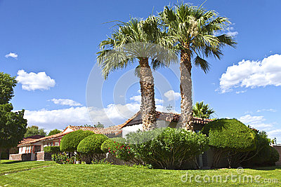 Palm trees in a Boulder city neighborhood Nevada.