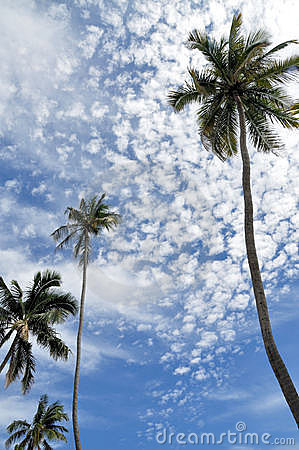 Palm trees and bright blue sky
