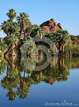 Free Palm Trees By Lake Royalty Free Stock Photography - 60132147