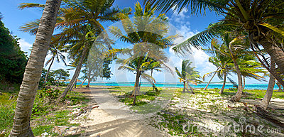Palm Trees on Caribbean Shore