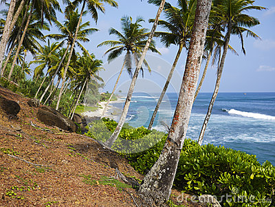 Palm trees close to Mirissa beach, Sri Lanka