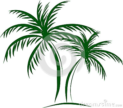 palm trees with coconut on white backgr