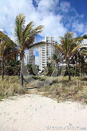 Palm trees condo on beach