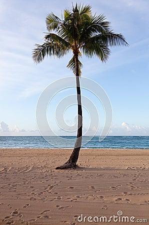 Palm trees at dawn in Waikiki