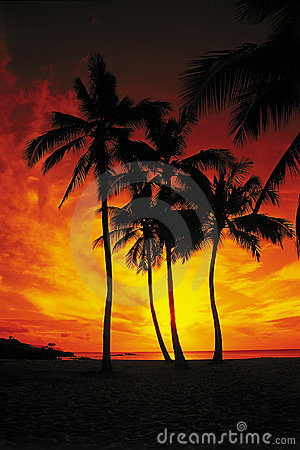 Palm Trees Drenched in a Red and Orange Sunset