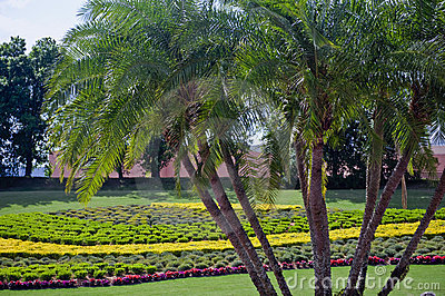 Palm trees and flower garden