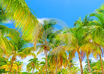 Palm trees forest