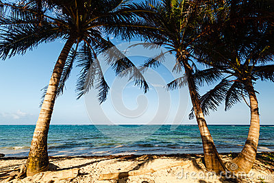Palm trees framing a beach and ocean view
