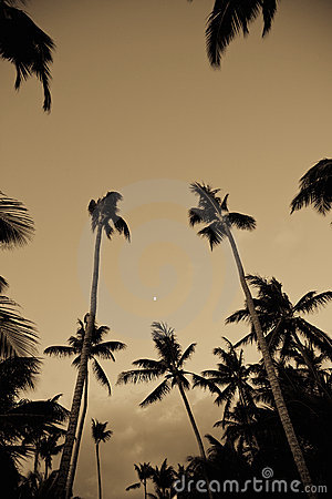 Free Palm Trees From Low Angle Stock Images - 8318734