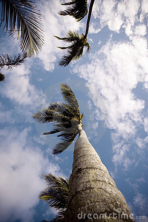 Free Palm Trees From Low Angle Stock Image - 8318891
