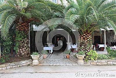 Palm trees stock image image 35960291