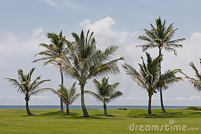 Palm trees on golf course