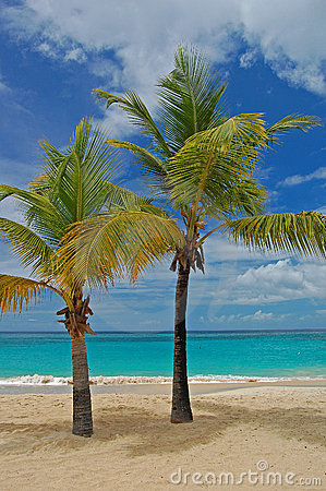 Palm trees on Grand Anse beach on Grenada Island