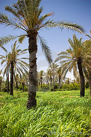 Palm trees in green grass