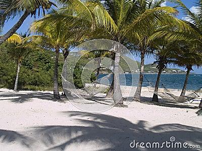 Palm Trees and Hammocks