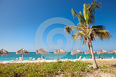 Palm trees hanging over a sandy beach