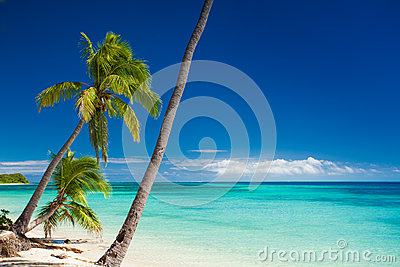Palm trees hanging over tropical beach