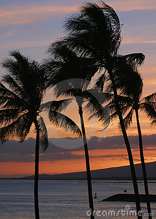 Palm Trees During a Hawaiian Sunset