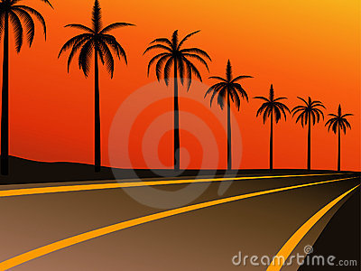 Palm trees on the highway