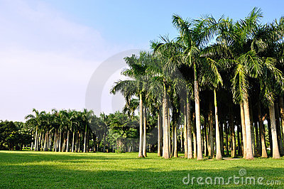 Palm trees horizontally in vast
