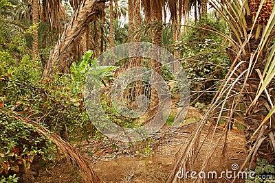Palm trees jungle