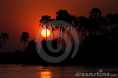 Palm Trees and Lake at Sunset