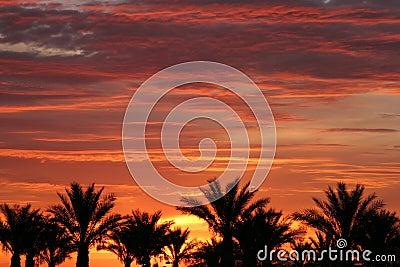 Palm trees during Las Vegas sunrise