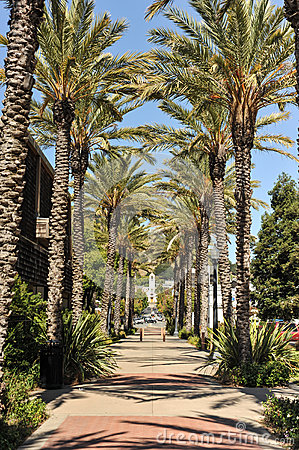 Palm trees line a walking path