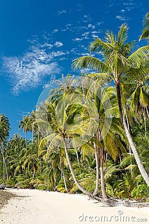 Palm trees on loneliness beach on island Koh Kood
