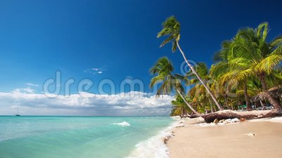 Palm trees on a lonely tropical island. Palm trees on the tropical beach, video stock footage