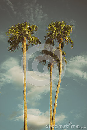Free Palm Trees Los Angeles California USA Royalty Free Stock Image - 61701886