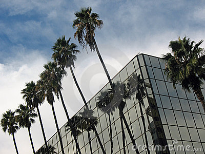 Palm Trees and Modern Building