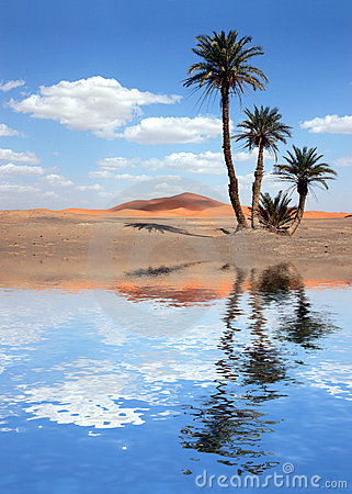 Palm Trees near the Lake in the Sahara Desert