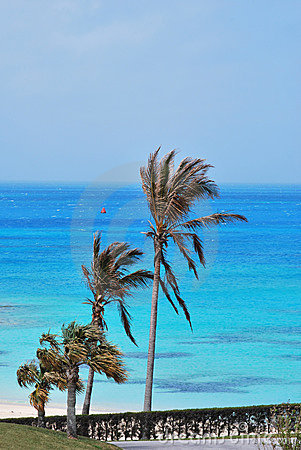 Palm trees on ocean beach