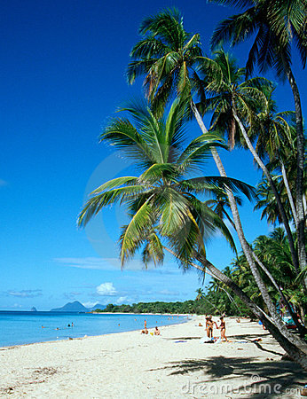 Free Palm Trees On Martinique Beach Royalty Free Stock Photography - 564257